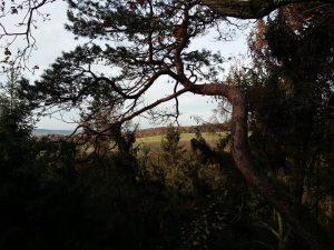 Zugewachsener Ausblick vom Äppelwoifelsen in Richtung Wingerstberg, 2015